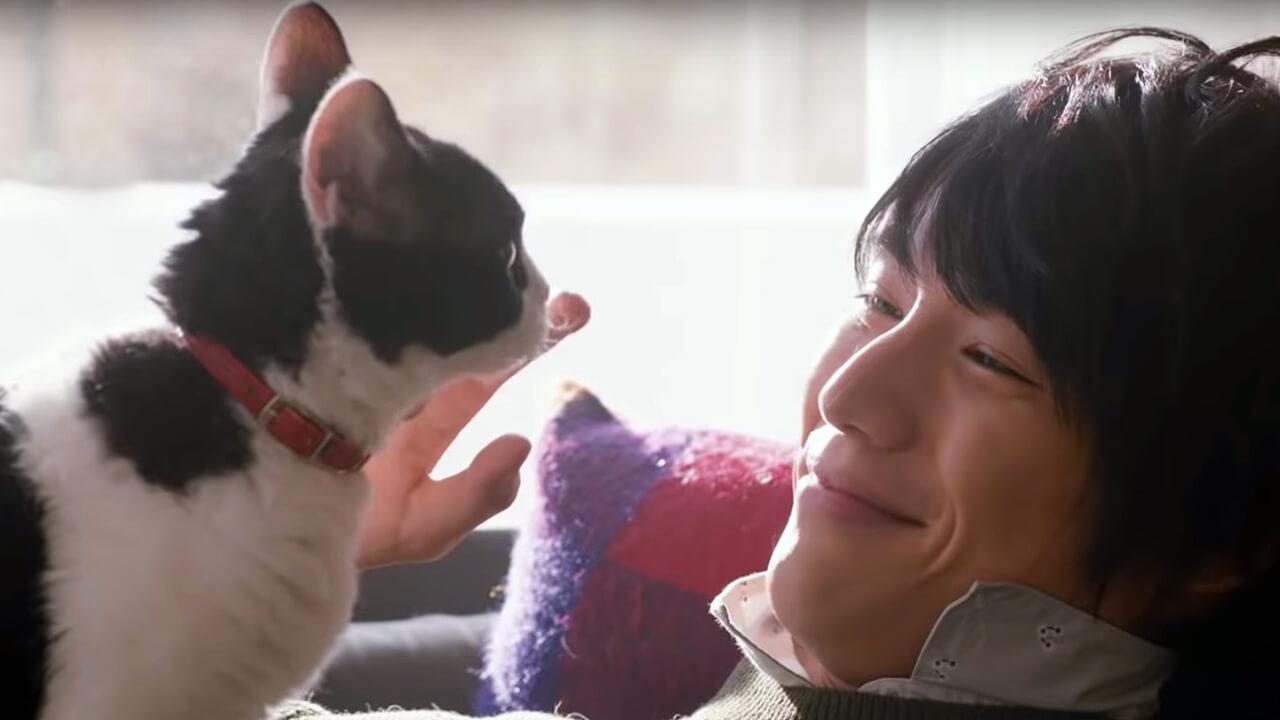 【影評】《旅貓日記》真摯催淚的人貓情誼首圖