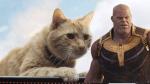 《驚奇隊長》橘貓「呆頭鵝」是復仇者聯盟打敗薩諾斯的關鍵?逆轉無限之戰,網友的三大推論──