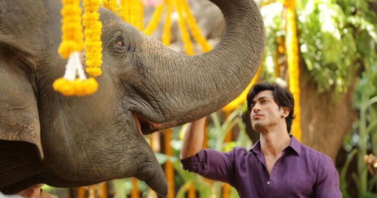 《叢林拳霸》探討印度重要議題——人與大象。