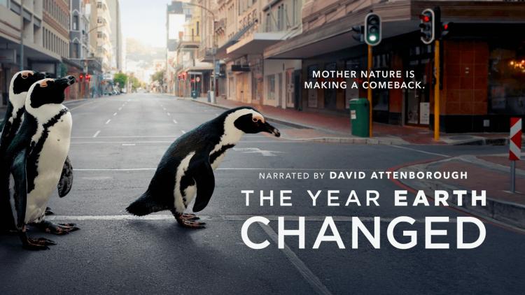 「看見企鵝過馬路」大衛艾登堡感覺好療癒!《這一年,地球變得不一樣》Apple TV+ 生態紀錄片看見疫情下的溫柔大自然首圖