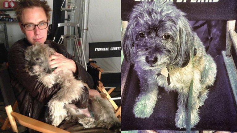 《自殺突擊隊 2》暫停拍攝,只因導演想向最愛的狗狗說再見:格魯特的原型「衛斯理馮史畢爾博士」