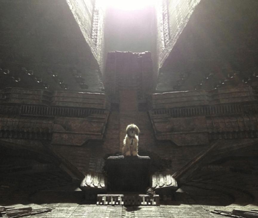 《星際異攻隊》導演的愛犬親臨片場。