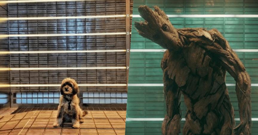 《星際異攻隊》樹人格魯特。