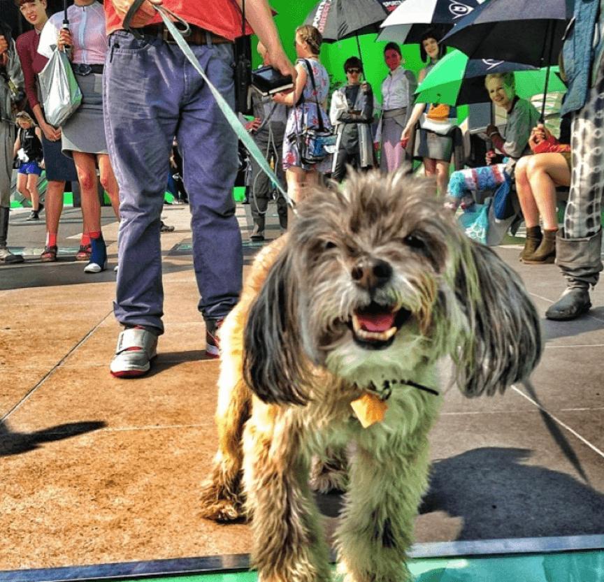 導演詹姆斯岡恩的愛犬。