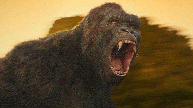 在《哥吉拉大戰金剛》之前 :《金剛》是誰的?電影巨猩的八十年權利戰爭首圖