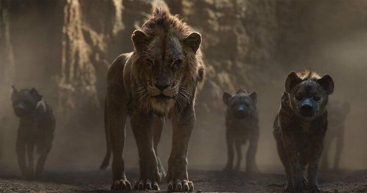 迪士尼《獅子王》中原國王木法沙的弟弟:刀疤,在木法沙死後繼承王位,但卻未好好治理榮耀國。