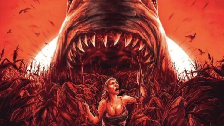 《玉米田中的鯊魚》