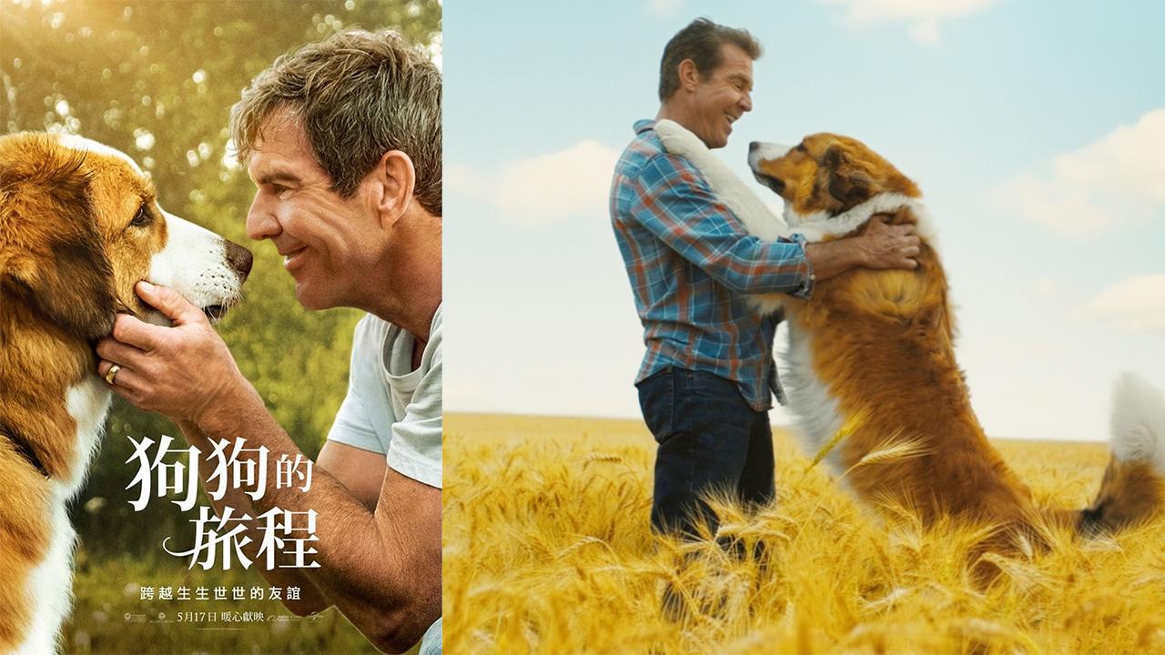 [快閃贈票]  《狗狗的旅程》特映會資格抽獎(已結束)首圖