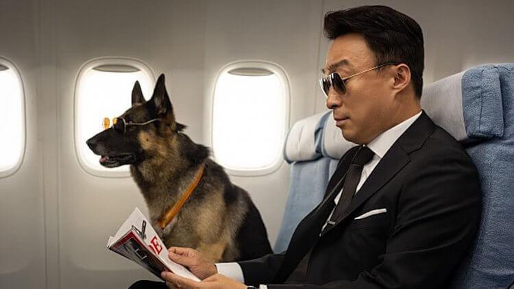 王牌探員李星民《明明會說話》靠「動物溝通」外掛辦案?韓國狂想犯罪喜劇電影 3/6 起全台上映首圖