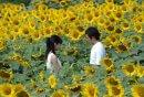 雨季來臨,就能見到媽媽了嗎 ?《現在,很想見你》竹內結子中村獅童共譜奇幻純愛,5/29 電影經典重映
