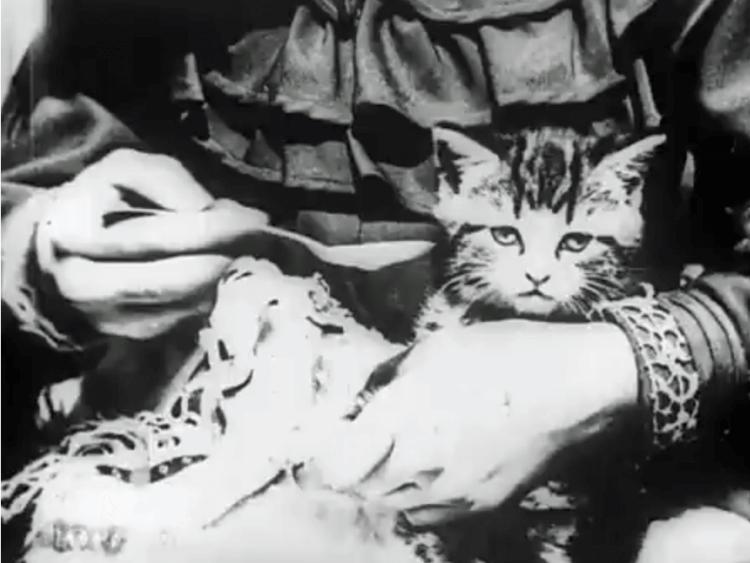 短片《小病貓》劇照。
