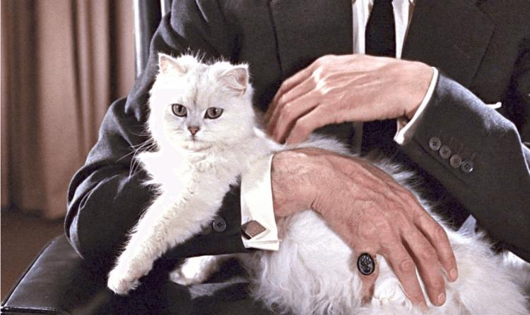 《第七號情報員續集》電影裡的白貓。