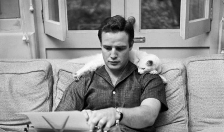 馬龍白蘭度與他的貓貓。