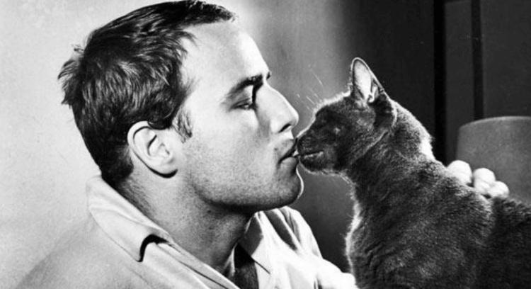 馬龍白蘭度表達他對貓貓的愛。