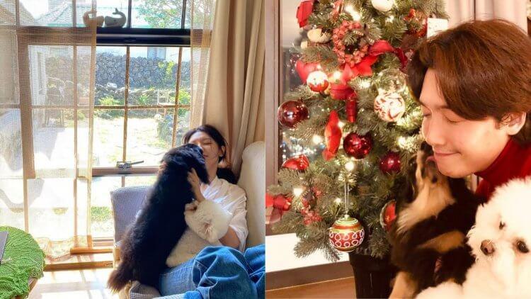 鄭敬淏的淏英、秀英的愛鳳,兩人的愛犬時常出現在彼此的 Instagram。