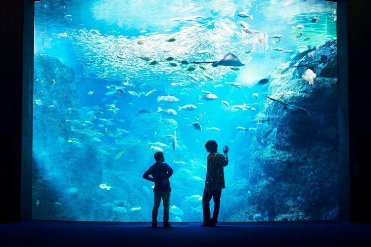 《海獸之子》原著作者五十嵐大介與主題曲創作者米津玄師一同造訪重要場景新江之島水族館