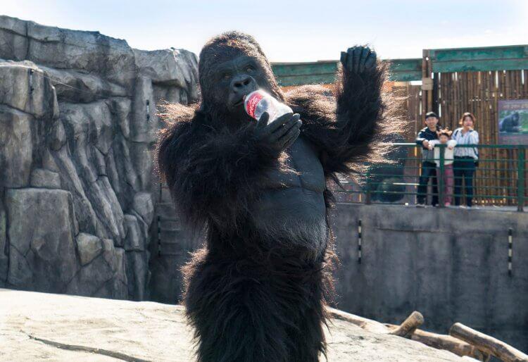 韓國喜劇電影《超人氣動物園》劇照,有看過會喝可樂的猩猩嗎?