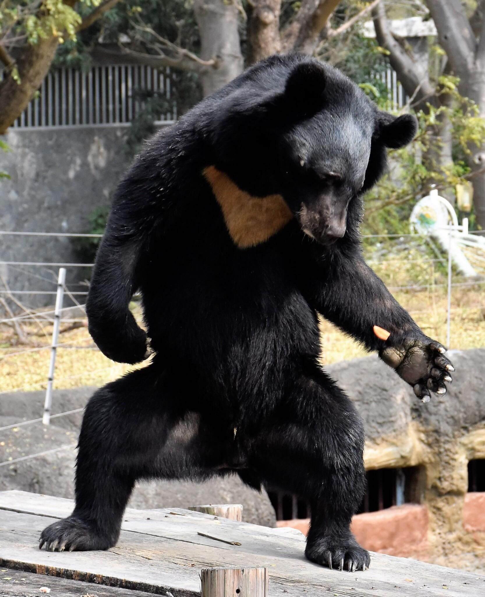 韓國喜劇電影《超人氣動物園》中讓員工扮成動物的奇想劇情,讓網友不禁聯想起高雄壽山動物園的台灣黑熊「波比」。