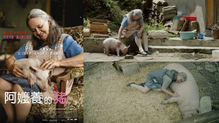 [快閃贈票] 《阿嬤養的豬》特映會資格抽獎首圖