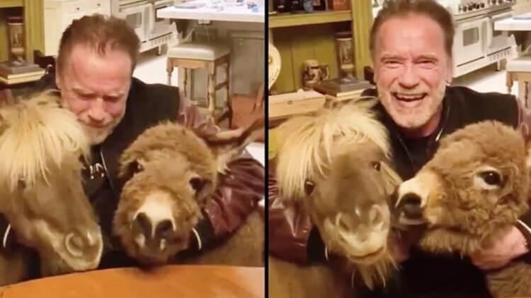 魔鬼終結者成防疫大使!阿諾史瓦辛格與寵物們一起拍攝宣導影片,要大家乖乖「待在家」首圖