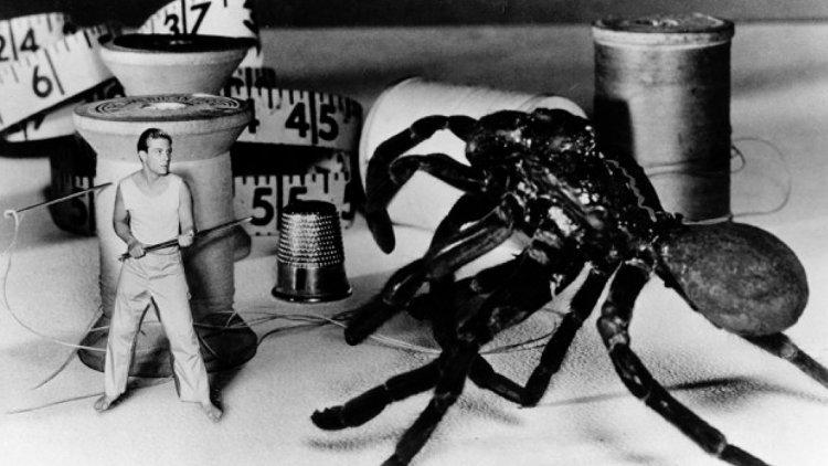 進擊的大蟲子!影史上最早的三部必看怪獸 B 級片:《牠們》、《狼蛛》、《致命螳螂》首圖