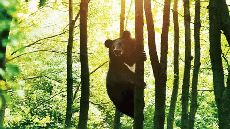 MIT台灣誌導演麥覺明歷時11年拍攝《黑熊來了》生態紀錄片  票房破千萬挺進賀歲檔,屏息齊聽「黑熊的呼吸」首圖