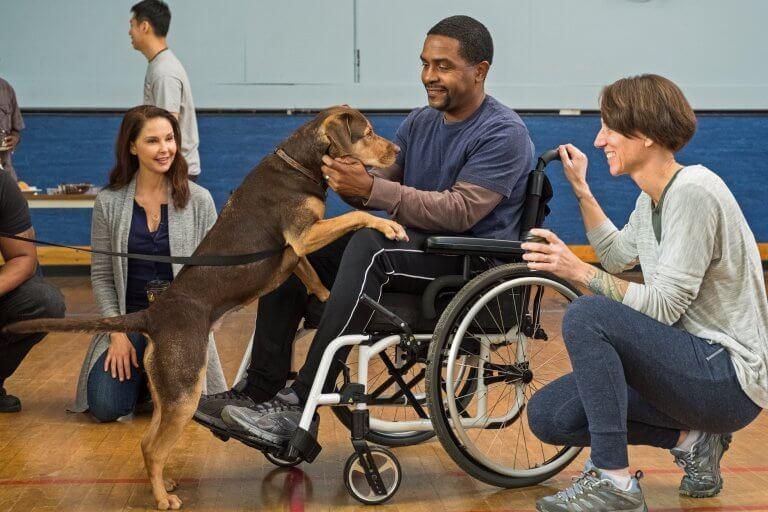 《為了與你相聚》的狗演員「雪碧」(Shelby) 既專業又有感染力