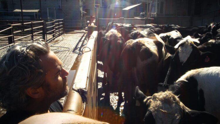 瓦昆菲尼克斯十分重視動物權利,並與動保團體親自前往屠宰場拯救牛隻。