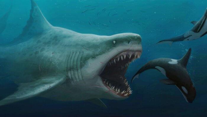 巨齒鯊 示意 大白鯊