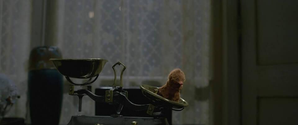 在《怪獸與葛林戴華德的罪行》屬於「賣萌擔當」的玻璃獸。