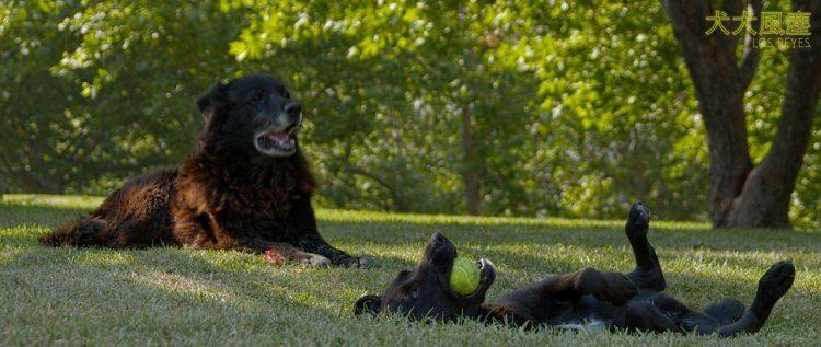 《犬犬風塵》劇照。