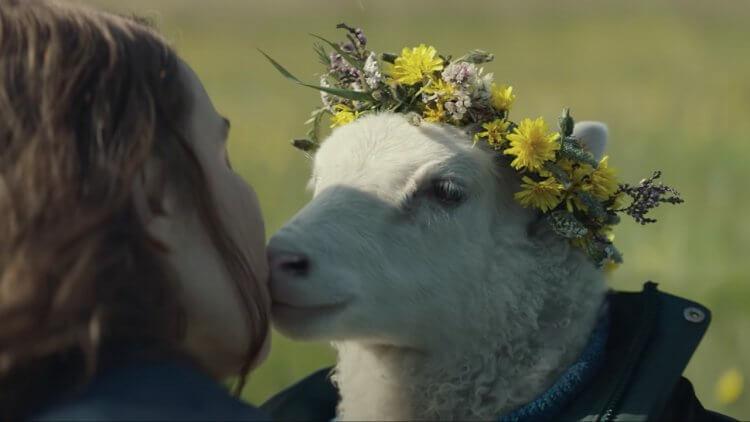 冰島驚悚奇片《羊懼》正式預告釋出!奪坎城一種注目原創獎,A24 再攜新銳導演祭出怪誕恐怖力作首圖