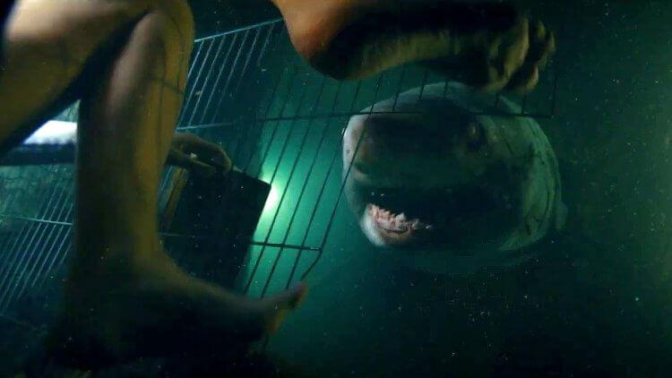 《深海鯊機》(47 Meters Down) 推出續集。