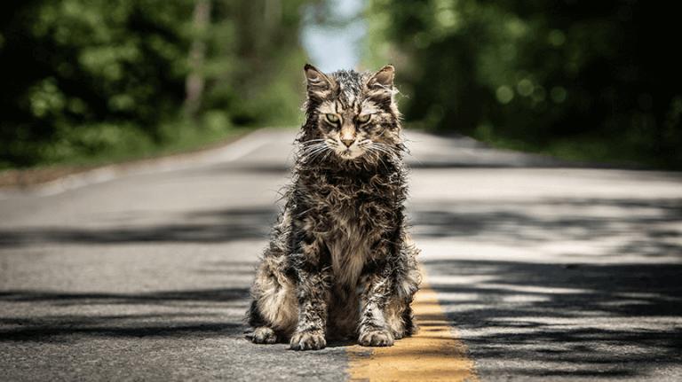 《禁入墳場》(Pet Sematary) 電影中,痛失愛貓的男主角以某種方式再度與愛貓相聚,但喵星人的樣貌似乎有些不對勁......