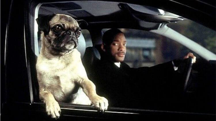 索尼曾計畫推出以《MIB 星際戰警》裡可愛的巴哥犬外星人法蘭克為主角的兒童向外傳電影。