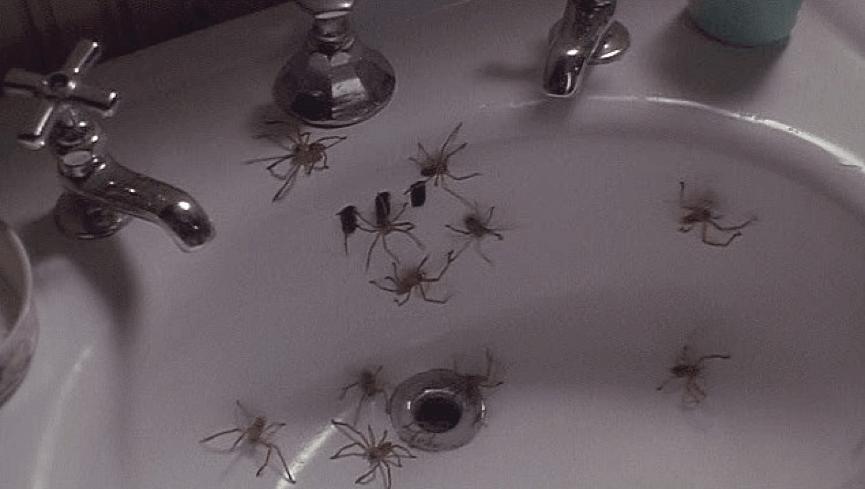 《 小魔星 》電影中不斷出現的蜘蛛會激起你的 密集恐懼症 ......