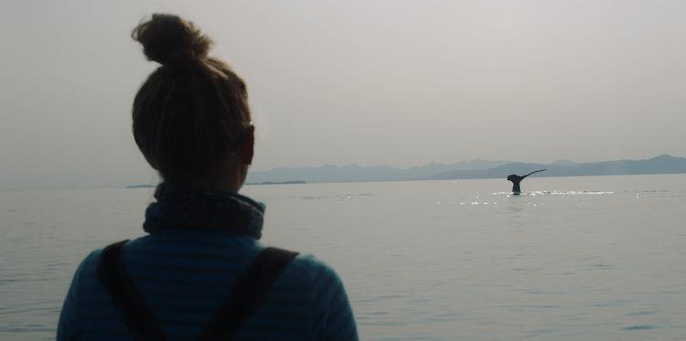 紀錄片《探尋鯨之音》劇照。