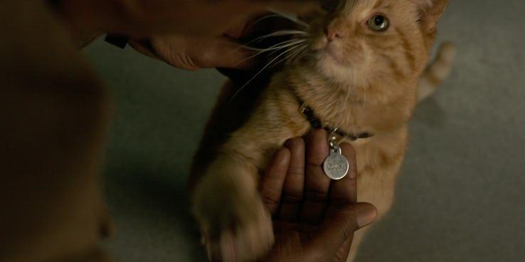 《驚奇隊長》全新預告中逗弄貓咪的尼克福瑞,難道真的是貓奴?