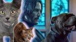 《捍衛任務 3:全面開戰》片場遭挾持、動作場面差點被毀,兇手是……上千隻野貓