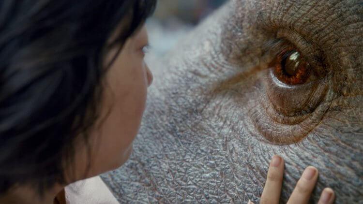 奉俊昊導演電影作品《玉子》中,對社會議題有著實的刻劃與映照現實。