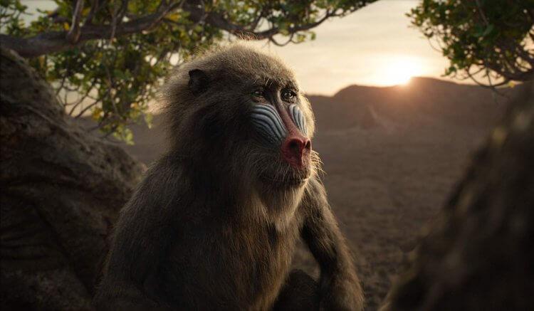 曾演出《美國隊長 3》《黑豹》等影劇作品的約翰卡尼爾為 2019 年《獅子王》中的狒狒長老拉飛奇配音演出。