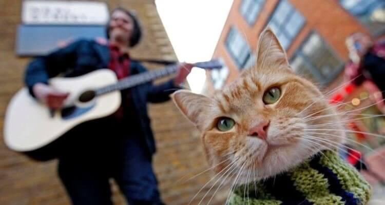 《遇見街貓 BOB》(A Street Cat Named Bob)