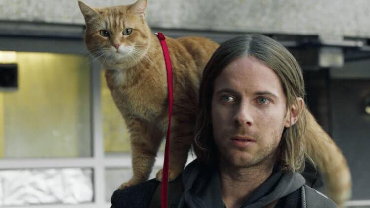 謝謝你的美好!《再見街貓BOB》與橘貓 Bob 共度的最後一個聖誕節,好好跟彼此道別——首圖