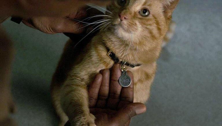 山繆傑克森表示用貓零食就能收服貓咪的心。