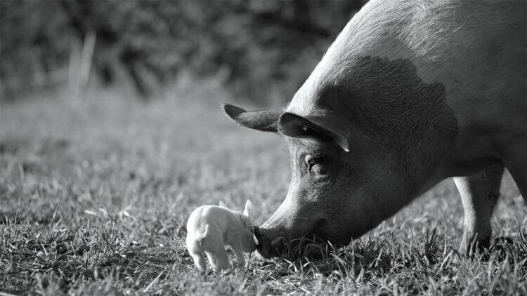 【影評】《農場我的家》: 農場動物的生活,沒有色彩的世界首圖