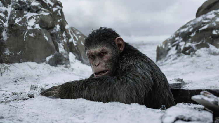 猿族戰爭仍未止息!《移動迷宮》導演威斯柏執導筒,全新的《猩球崛起》系列籌備中首圖