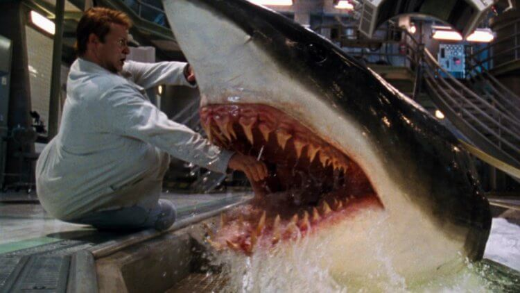【影評】《水深火熱》:雷尼哈林的奮力一搏,締造鯊魚電影的不朽傑作首圖