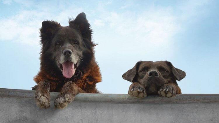 【影評】《犬犬風塵》: 在流浪犬的生命裡,看見一個世界首圖