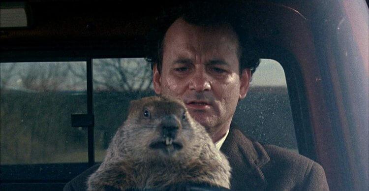 《今天暫時停止》比爾莫瑞與土撥鼠。