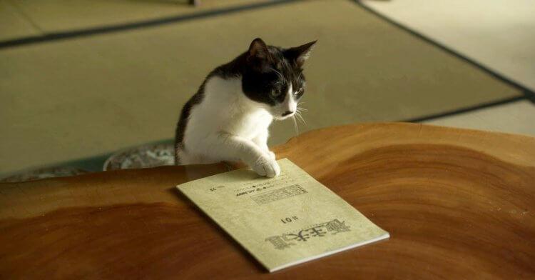 津田健次郎主演 Netflix 影集《極道工夫》劇照,桌上是動畫影集《極道主夫》的配音用劇本。